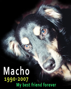 Macho, 1990-2007, My best friend forever